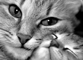 http://vetcare.amsterdam/wp-content/uploads/2016/07/love-cats-animals-green-eyes-kittens-adorable-wide-e1469042096718.jpg