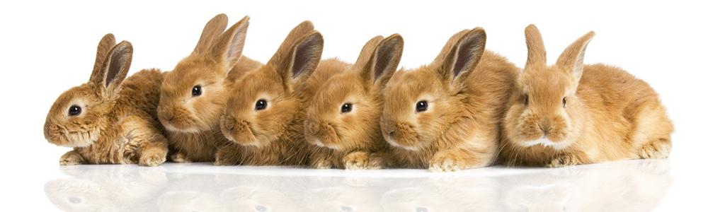 konijnenopeenrij.jpg
