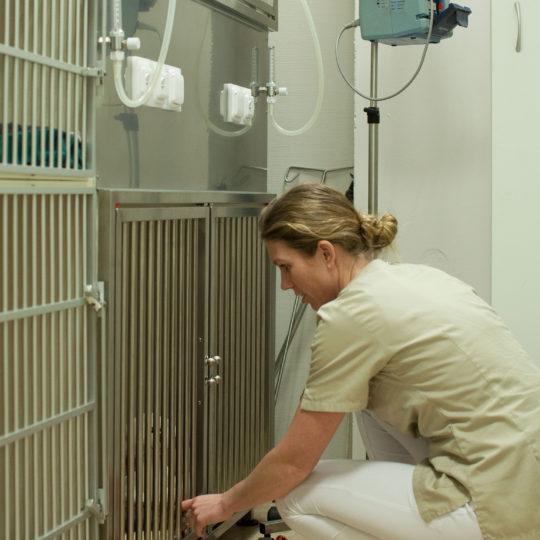 http://vetcare.amsterdam/wp-content/uploads/2017/03/MG_5884-540x540.jpg