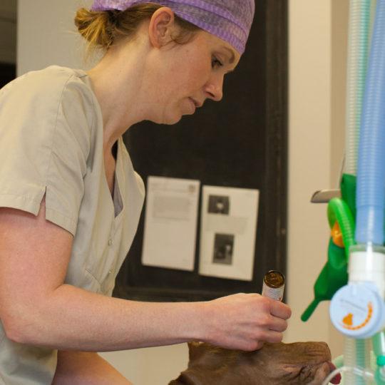http://vetcare.amsterdam/wp-content/uploads/2017/03/MG_5900-540x540.jpg